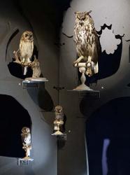 Nuits des Musées Clermont