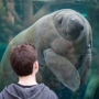 Les rendez-vous sauvages du Parc zoologique de Paris - Bassin des lamantins © Arnaud Brecht