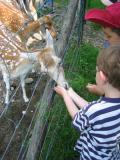 Enfants au zoo
