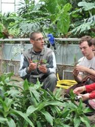 Plantation sous les tropiques