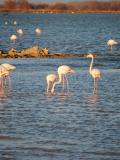 La Fête de la Nature 2013 dans les Bouches-du-Rhône