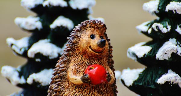 Balade contée en forêt Noël