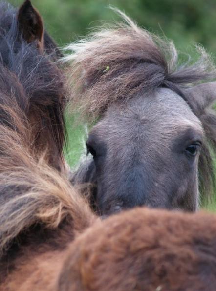 Les chevaux du bel air