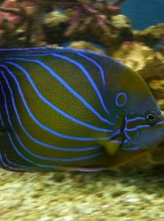 Aquarium tropical des Pyrénées