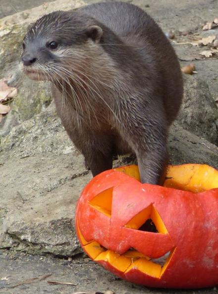 Halloween au Safari de Peaugres