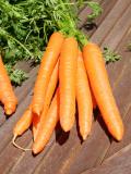 Côté Jardins - carottes