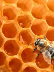 Fête du miel de Mouans Sartoux