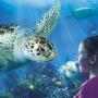 Turtle Fest SEA LIFE