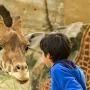 Bioparc et Zoo de Doué-la-Fontaine