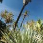Expo Du mélèze au palmier