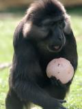Pâques au Zoo de Thoiry @Julie Platel
