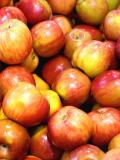 Cueillette de pommes aux Jardins de Brocéliande