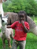 Ferme des lamas de Lafayette