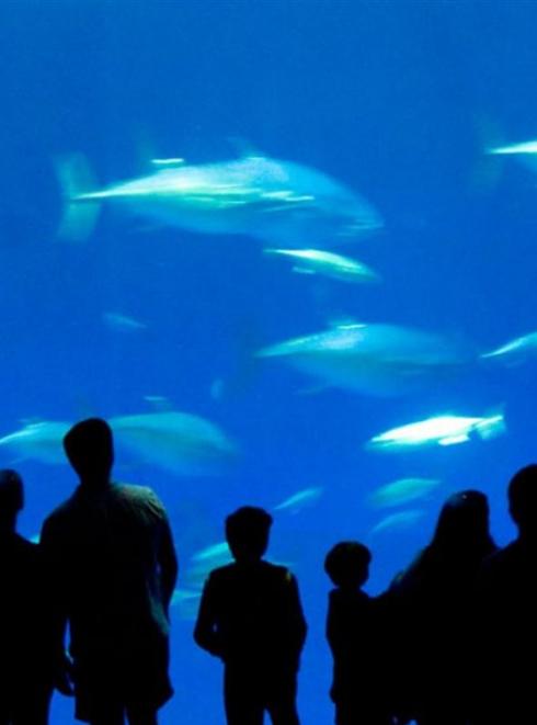 Aquarium Noirmoutier