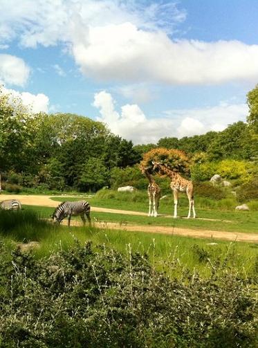 Zoo de Lyon
