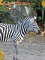 Le parc zoologique de Lille