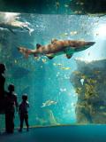 Aquarium de La Rochelle