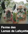 Les Lamas de Lafayette