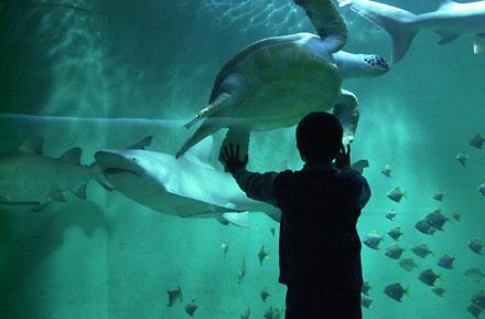 Aquarium-du-Grand-Lyon-0-38519.jpg