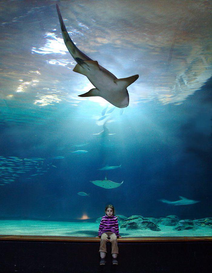 Aquarium de Lyon : sortie ludique en famille ? la Mulatiere ...